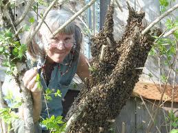 bee centered beekeeping keeping backyard bees