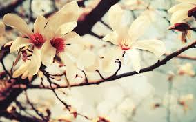 spring flowers wallpaper life in image pinterest spring
