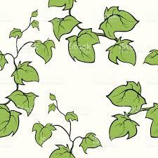 ivy vector hand drawn seamless pattern climbing woody plant stock