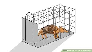 How Do You Get Rid Of Skunks In Your Backyard How To Get Rid Of Armadillos 11 Steps With Pictures Wikihow