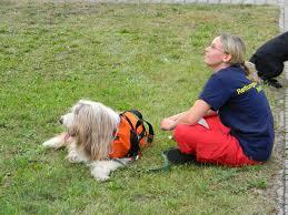 Tierarzt Bad Wildungen Vita Tierarztpraxis Fit 4 Motion