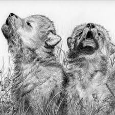 pencil drawings of wolves wolf pups pencil drawing archives sabine