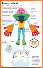 my amazing body machine a colorful visual guide to how your body