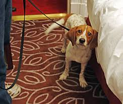 Do Bed Bugs Get On Dogs How To Get Rid Of Bed Bugs Using Less Pesticide Invisiverse