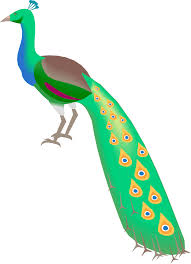 cartoon peacock free download clip art free clip art on
