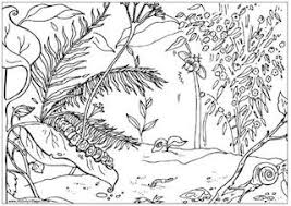 jungle coloring google jungle scenery coloring pages
