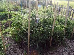 Tomatoes Trellis Amazon Com Trellis Netting For Smart Gardeners Supports