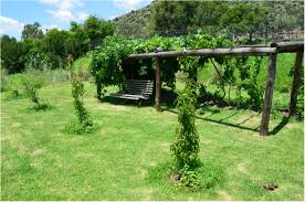 backyards splendid simple arched trellis for grapes or pole