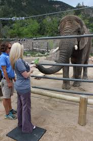 you can hand feed the beautiful elephants at cheyenne mountain zoo
