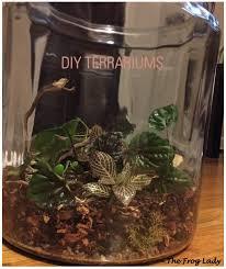 diy terrariums u2013 the frog lady