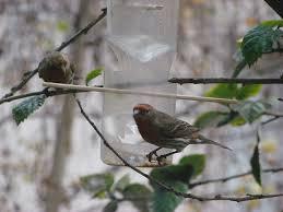 7 diy recycled bird feeders earth911 com