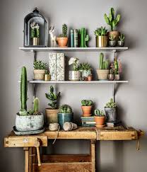 cactus home decor new work for plantagen plants cacti and urban