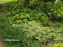 native plants of texas shady characters you want in your garden east texas gardening