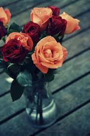 imagenes de rosas vintage rosas vintage flor foto gratis en pixabay