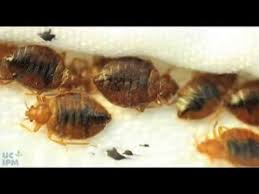 Bed Bug Detector How To Use A Bed Bug Detector Youtube