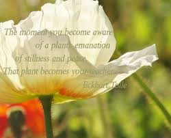 the power of now a guide to spiritual enlightenment eckhart tolle quotes to end emotional suffering elephant journal