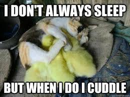 Cuddle Meme - i don t always sleep but when i do i cuddle cuddle cat quickmeme