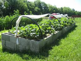 Strawberry Garden Beds Movin U0027 On Up Proven Winners