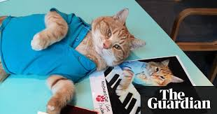 Cat Playing Piano Meme - bento the keyboard cat internet sensation and youtube star dies