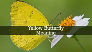yellow butterfly meaning a yellow butterfly can be a sign of