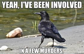 Crow Meme - nonchalant crow memes quickmeme