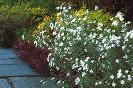 great plants for a fall cutting garden finegardening