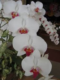 orchids pictures orchid growing for beginners what are the basics of growing orchids