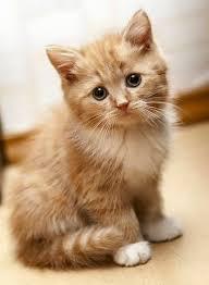 beautiful kittens 3311 best kittens images on pinterest cute kittens kitty cats