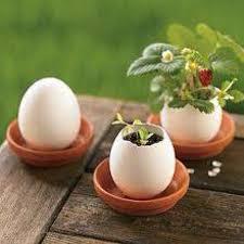 ground egg shells 29 best egg shell planting images on easter ideas egg