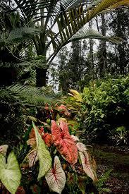 92 best images about tropical garden ideas on pinterest gardens