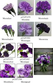 flower colour and cytochromes p450 philosophical transactions of