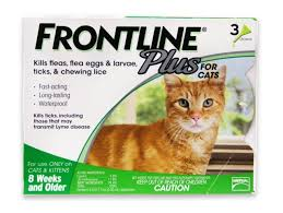 fleas on cats symptoms veterinary treatment and home remedies