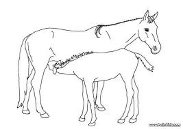 foal mother picture coloring pages hellokids