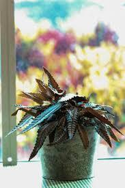spirit halloween dayville ct 133 best plants images on pinterest houseplants beauty secrets