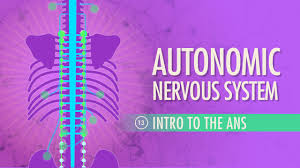 Ans Anatomy And Physiology Autonomic Nervous System Crash Course A U0026p 13 Youtube