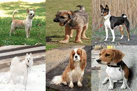small dogs with children of all ages best family list