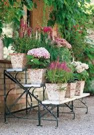 quarter plant terrace plant ideas plants