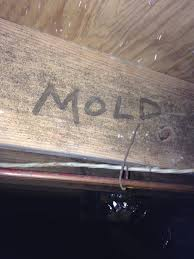 basement white mold or efflorescence in basements and crawl spaces