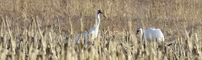 Indiana wildlife tours images Indigo birding nature tours jpg