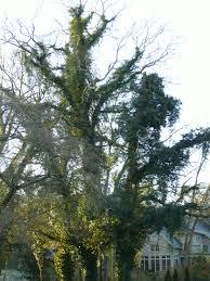 trees the garden bench