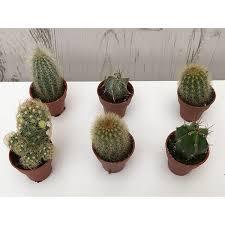 best 25 buy cactus ideas on things i need to buy buy