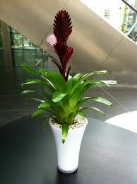 beautiful house plants beautiful indoor plants the vriesea a flaming sword covers home