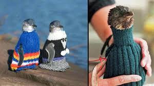sweaters for penguins u2022 lazer horse