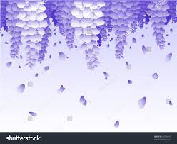 hanging wisteria flower falling petal background stock vector