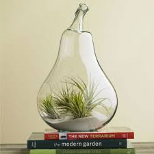 10 unique glass terrariums in 2018 best decorative terrarium