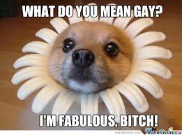 i m fabulous bitch fabulous by patresan meme center