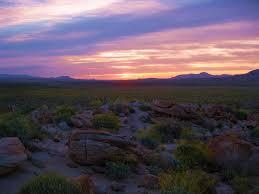 panoramio photo of 7 waxing sun over fields of desert flowers