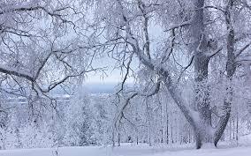 snow white trees by deingel on deviantart