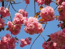 free images tree branch fruit leaf flower petal bloom