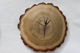 wood slice nature made wood slice wall rustic decor
